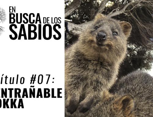 EN BUSCA DE LOS SABIOS #7: «El entrañable Quokka